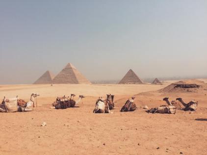 123_camels_desert_egypt